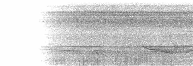 Crested Partridge - Scott  Connop