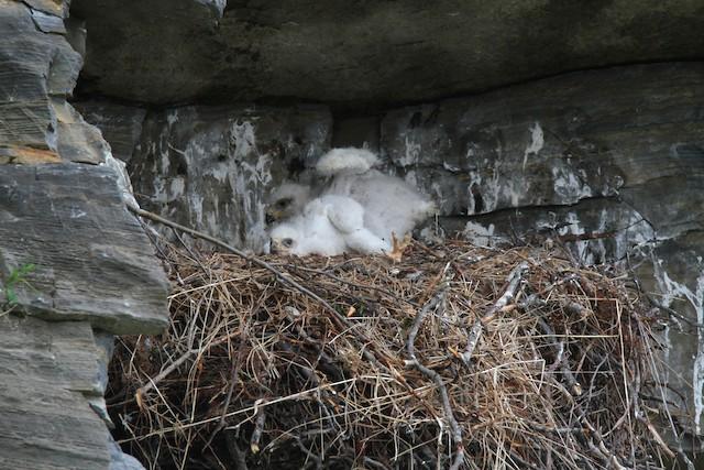 Nest (Alaska, United States)