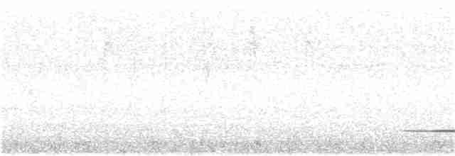 Cinereous Tinamou - Edwin Munera