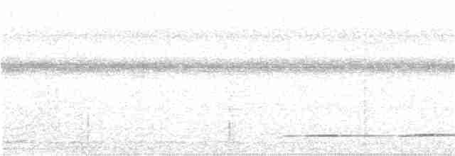 Undulated Tinamou - Edwin Munera