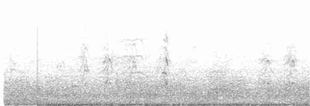 Fulvous Whistling-Duck - Thomas Miko