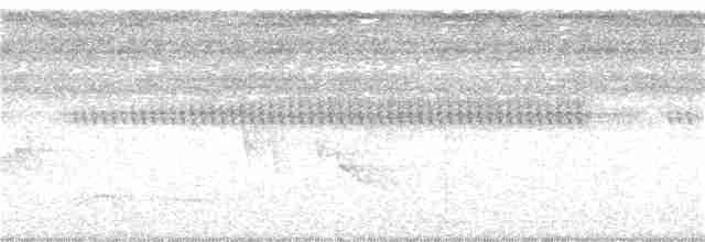 White-throated Tinamou - Will Sweet