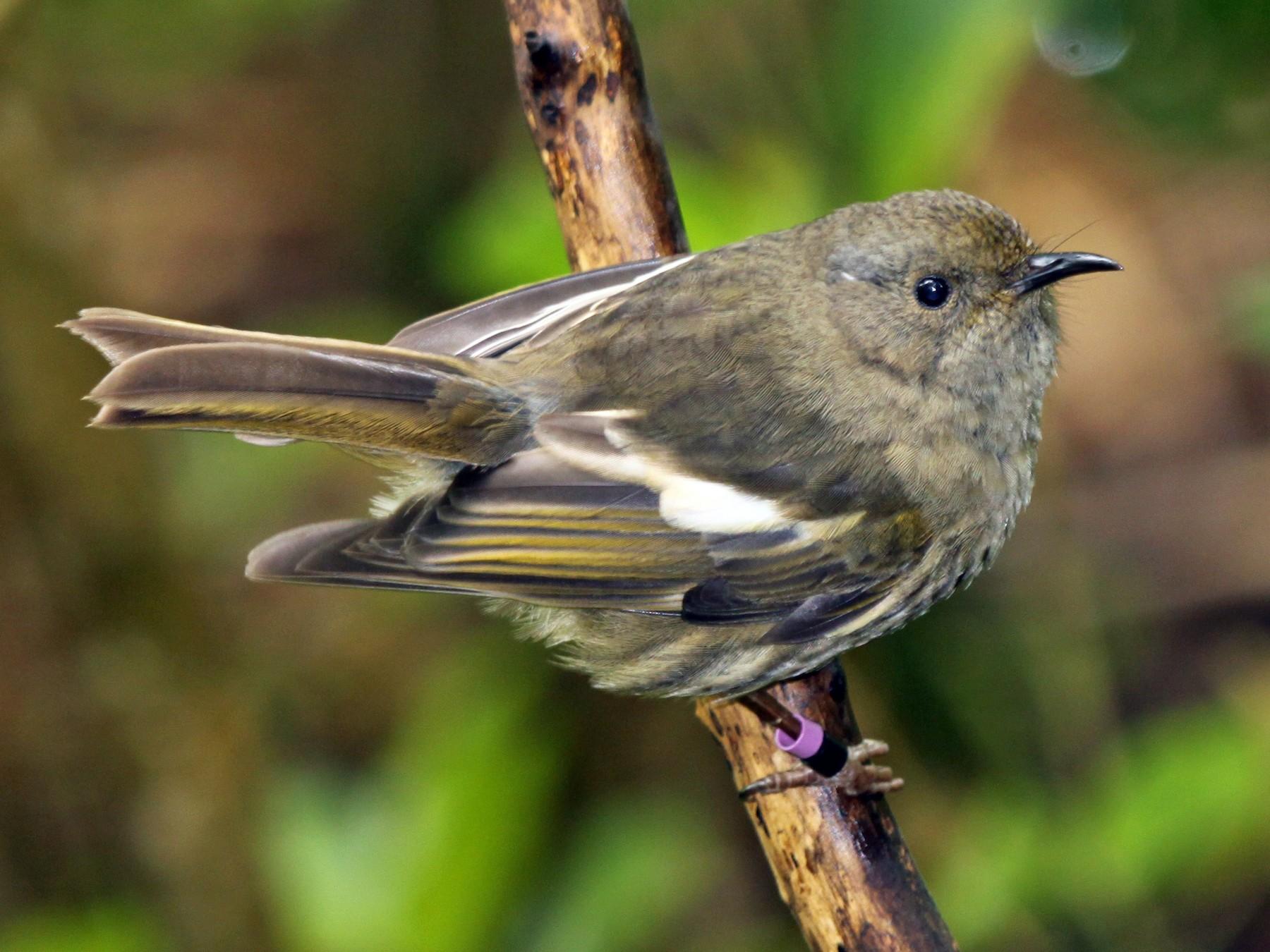 Stitchbird - Knut Hansen