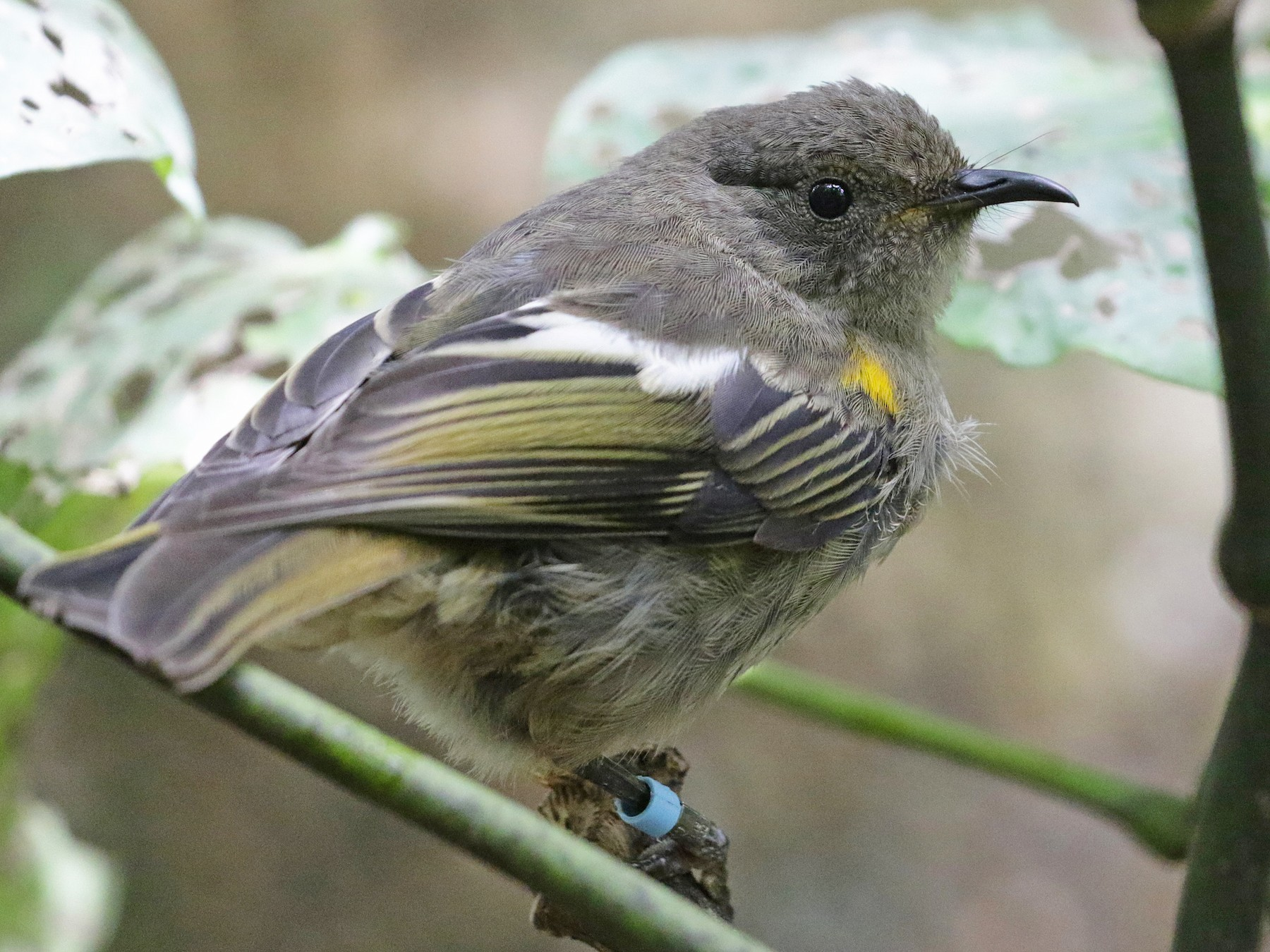 Stitchbird - Cameron Eckert