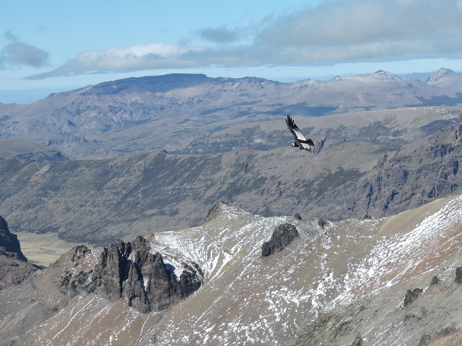 Andean Condor - José  Fernández Piñar