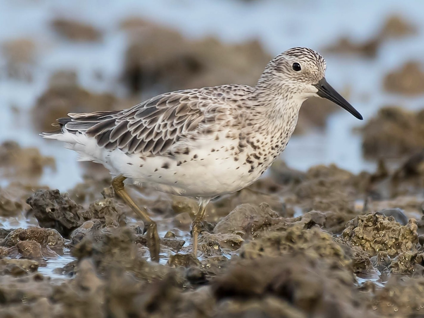 Great Knot - Terence Alexander