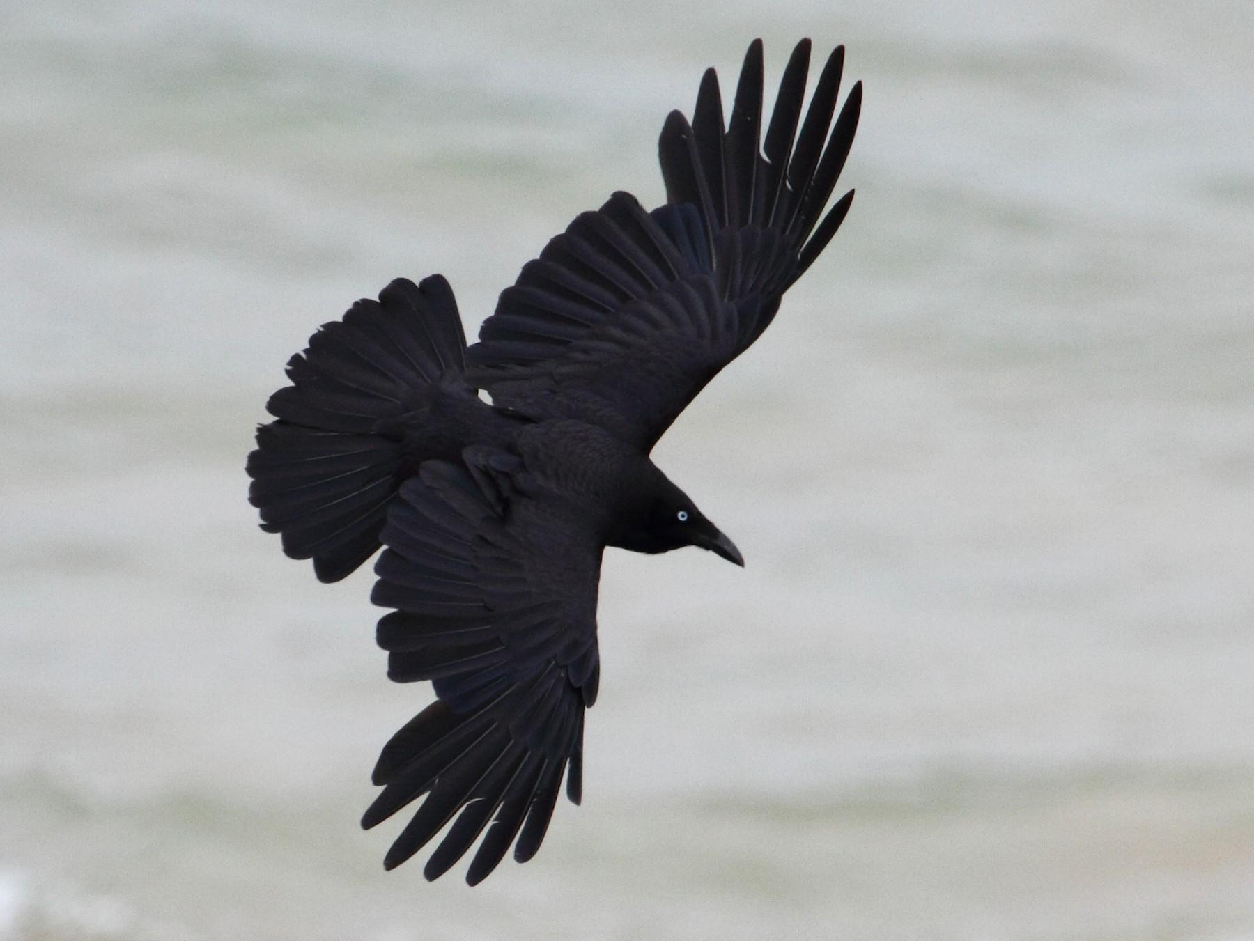 Forest Raven - Ric Else