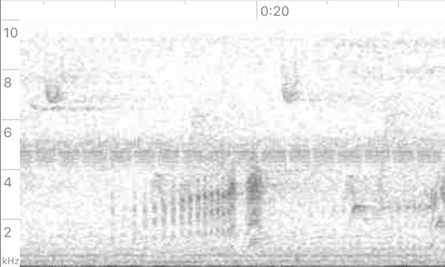 """Figure 3: Song (""""<em>rrrrrreah!</em>"""")."""