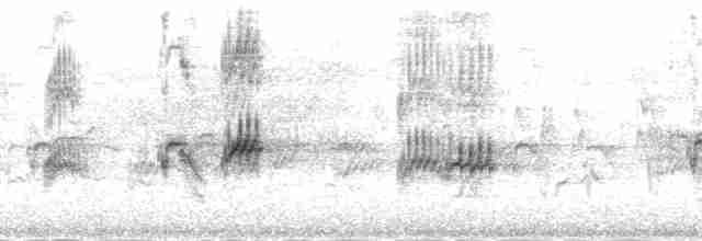 Evening Grosbeak (type 4)