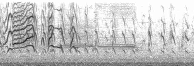 Black-bellied Whistling-Duck (fulgens) - Gerrit Vyn