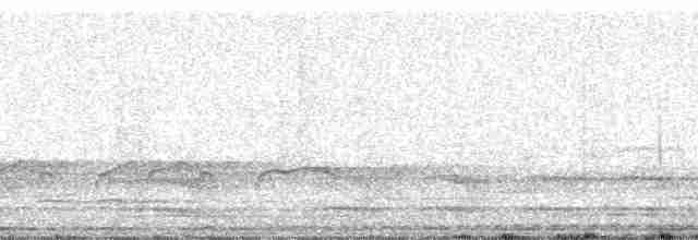 Thicket Tinamou (cinnamomeus Group) - Michael Andersen