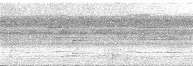 Great Tinamou - Blaine Carnes