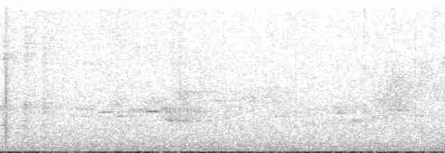 Thicket Tinamou (occidentalis) - Kathi Borgmann