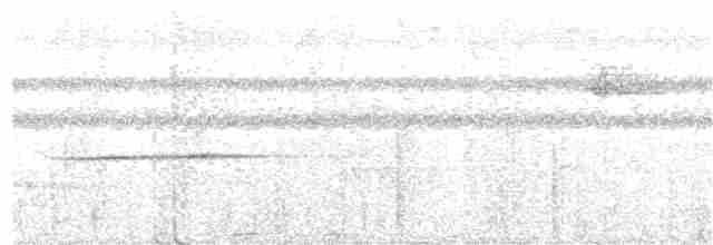 Great Tinamou - johnny powell