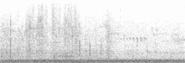 Green-winged Teal (Eurasian) - Nathan Pieplow