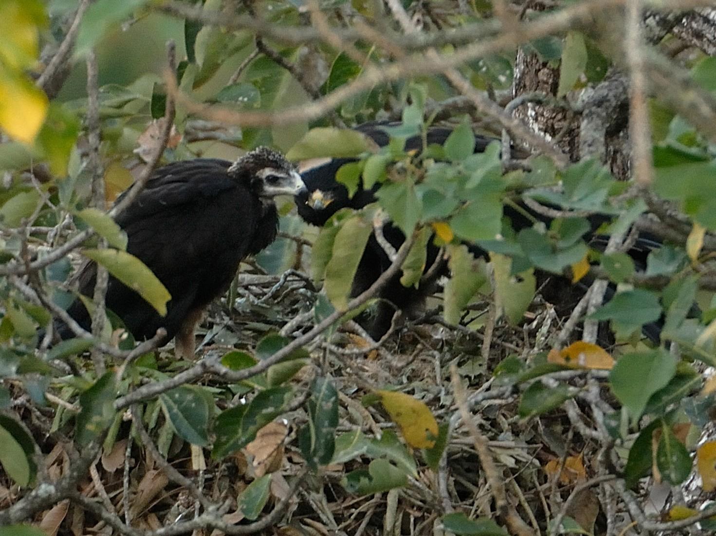 Black Eagle - Kalyan Varma
