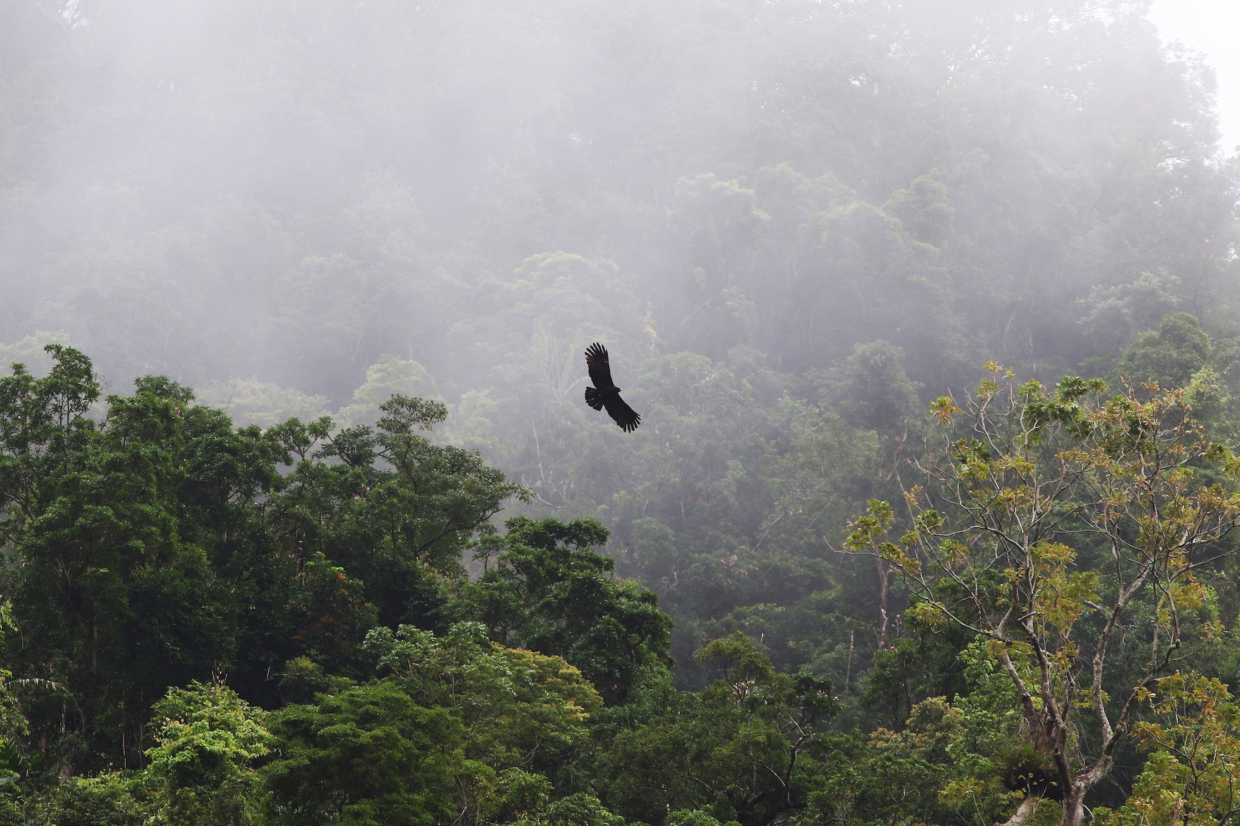 Black Eagle - Chien-wei Tseng
