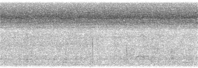 Berlepsch's Tinamou - David M. Bell