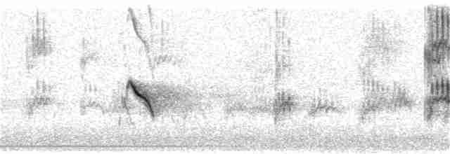 Evening Grosbeak (type 1)
