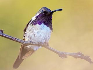 - Beautiful Hummingbird