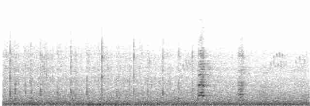 Coscoroba Swan - Renacer  Experimental