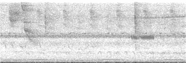 Yellow-legged Tinamou (zabele) - Wagner Nogueira