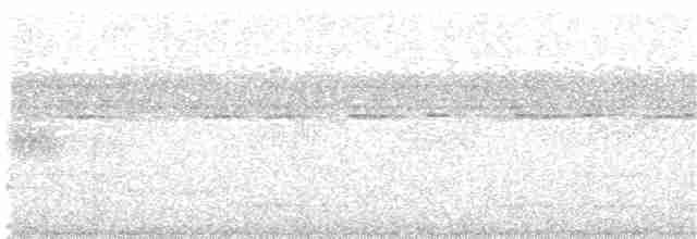 Vanuatu Scrubfowl - Mark O'Brien