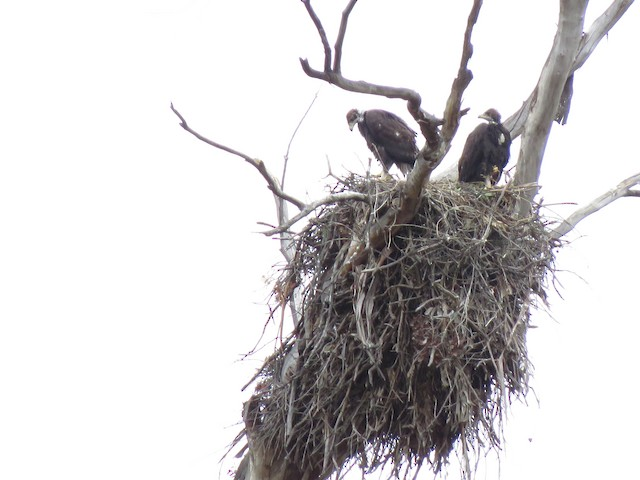 Nest (California, United States)