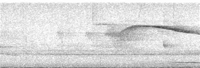 Slaty-breasted Tinamou - Dallas Levey