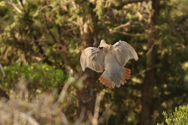 Philby's Partridge