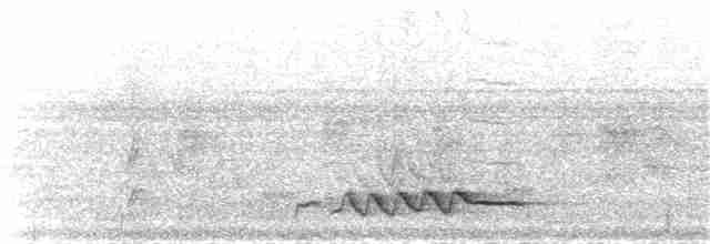 Rennell Shrikebill