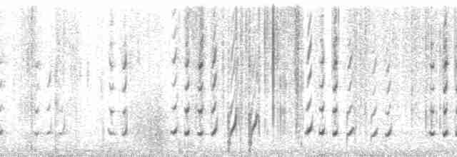 Spotted Wood-Quail - David L. Ross, Jr.