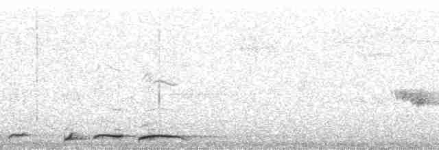 Ruddy Pigeon (Berlepsch's) - David L. Ross, Jr.