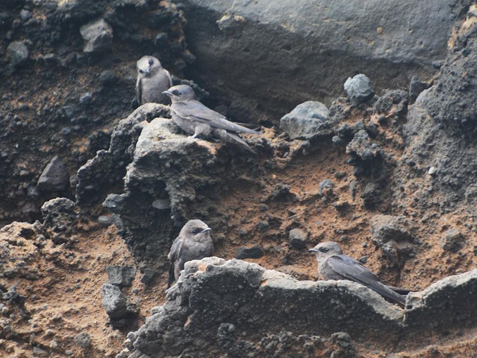 Galapagos Martin - Luis  Die