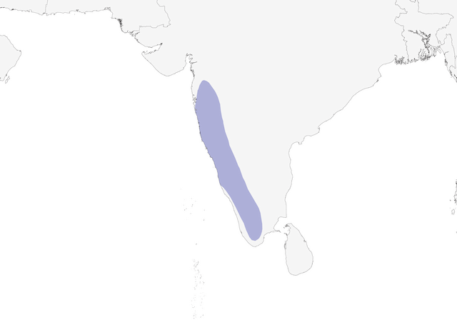 Distribution of the Malabar Gray Hornbill