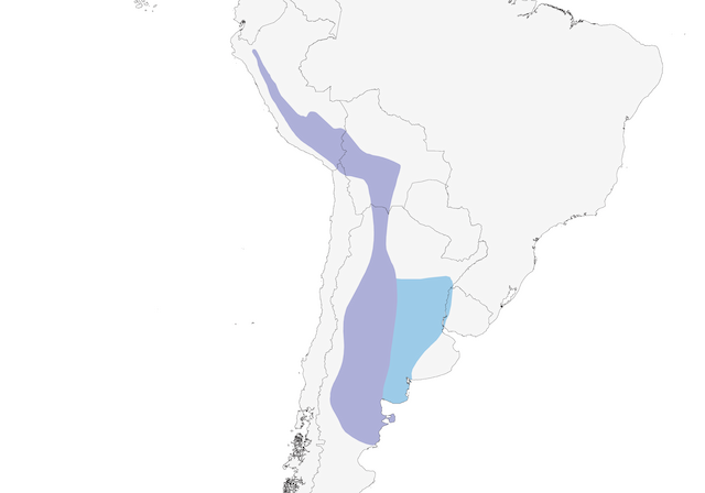 Distribution of the Yellow-billed Tit-Tyrant