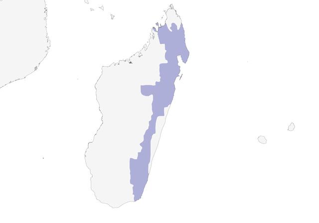 Distribution of the Nuthatch-Vanga