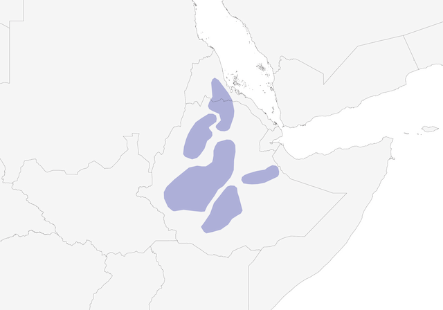 Distribution of the White-backed Black-Tit