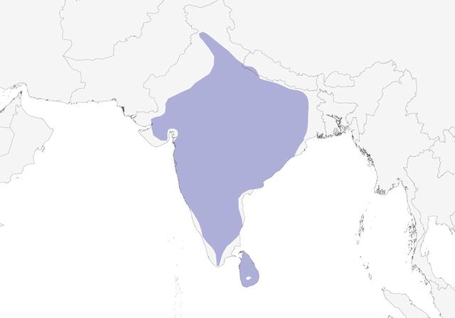 Distribution of the Jungle Prinia