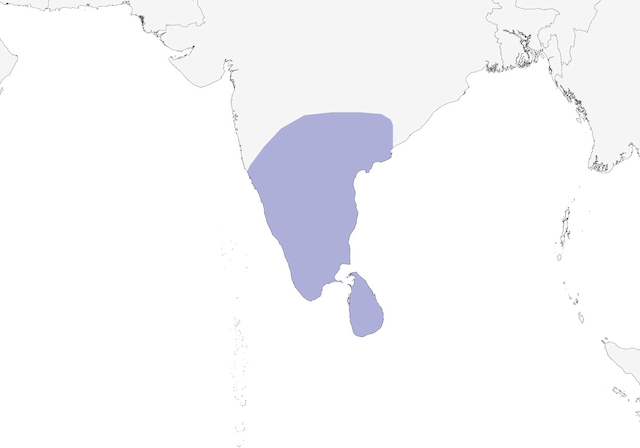 Distribution of the Yellow-billed Babbler