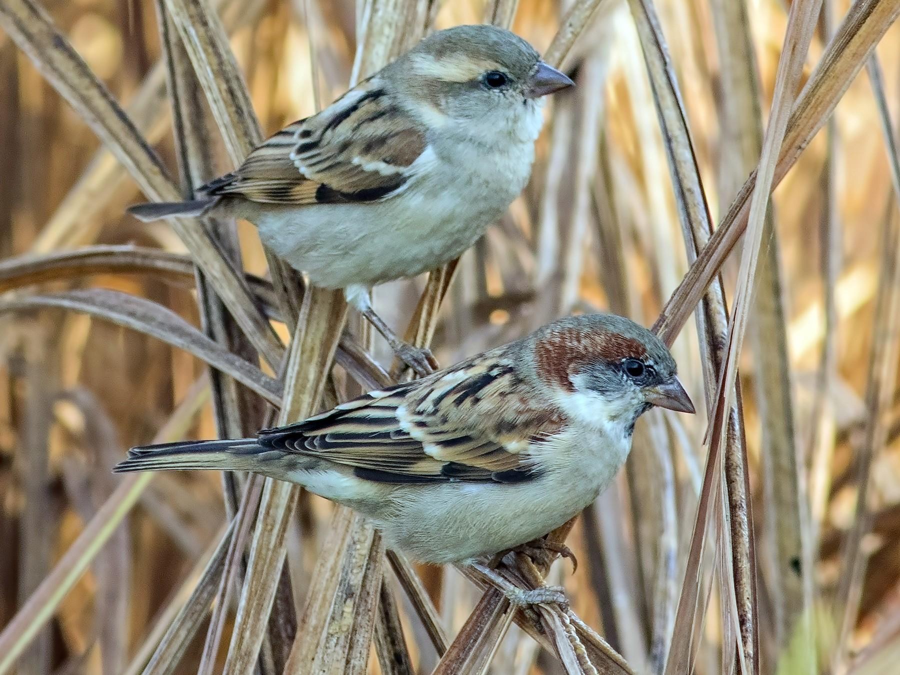 Sind Sparrow - Kavi Nanda