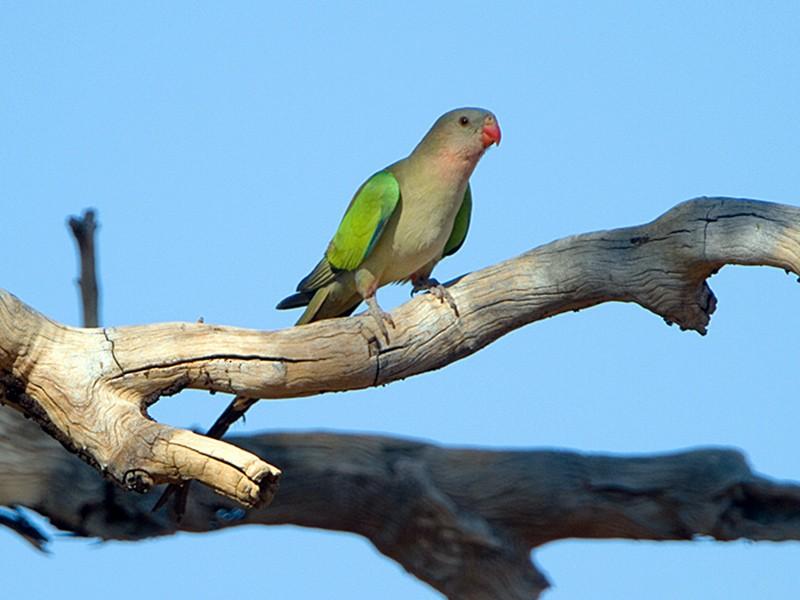 Princess Parrot - Stephen Murray