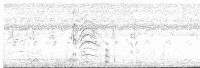 Fulvous Whistling-Duck - Paul Bourdin