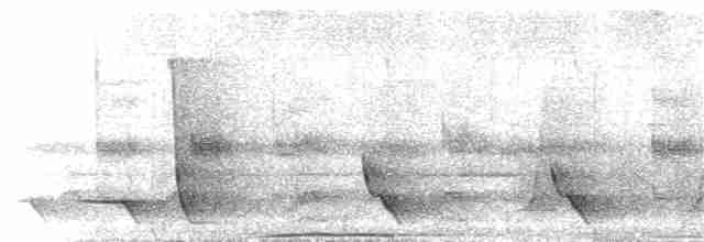 Oriole Whistler