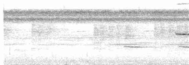 Berlepsch's Tinamou - Julia Wittmann