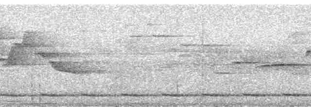 Gray-breasted Partridge - John C. Mittermeier