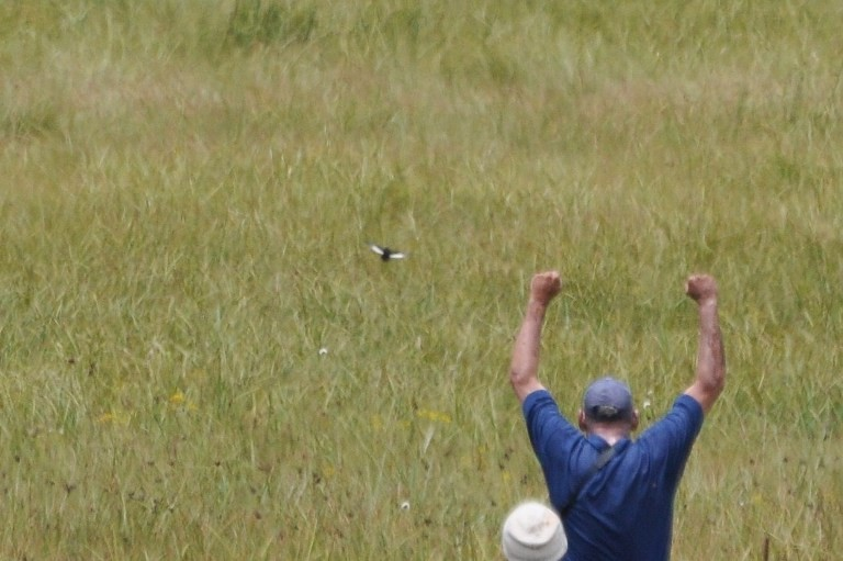 White-winged Flufftail - Dylan Vasapolli - Birding Ecotours
