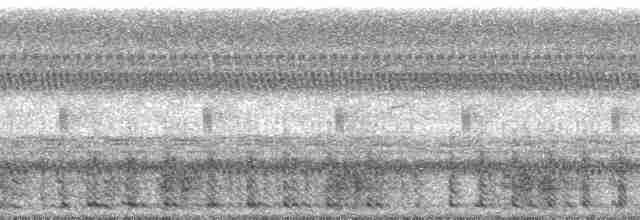Spotted Whistling-Duck - John C. Mittermeier