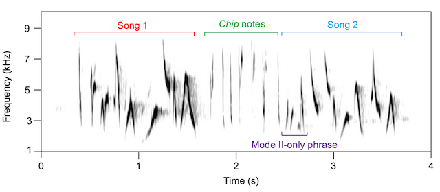 Figure 4. Spectrograms of Mode II dawn singing by a male Canada Warbler.
