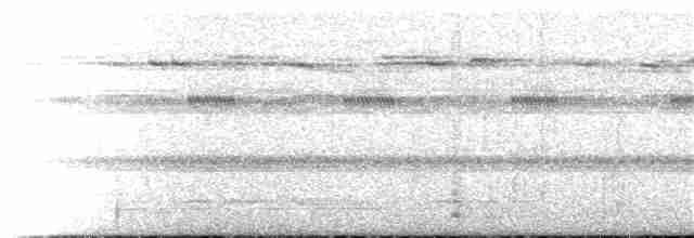 Gray-legged Tinamou - Tom Johnson